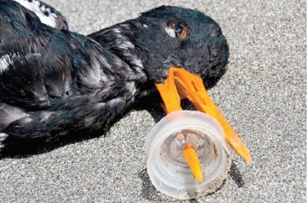 Gustavo Ariel D' Adamo - plastico-en-el-mar