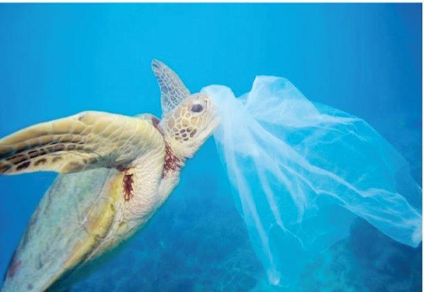 Gustavo Ariel D'Adamo - plastico-en-el-mar